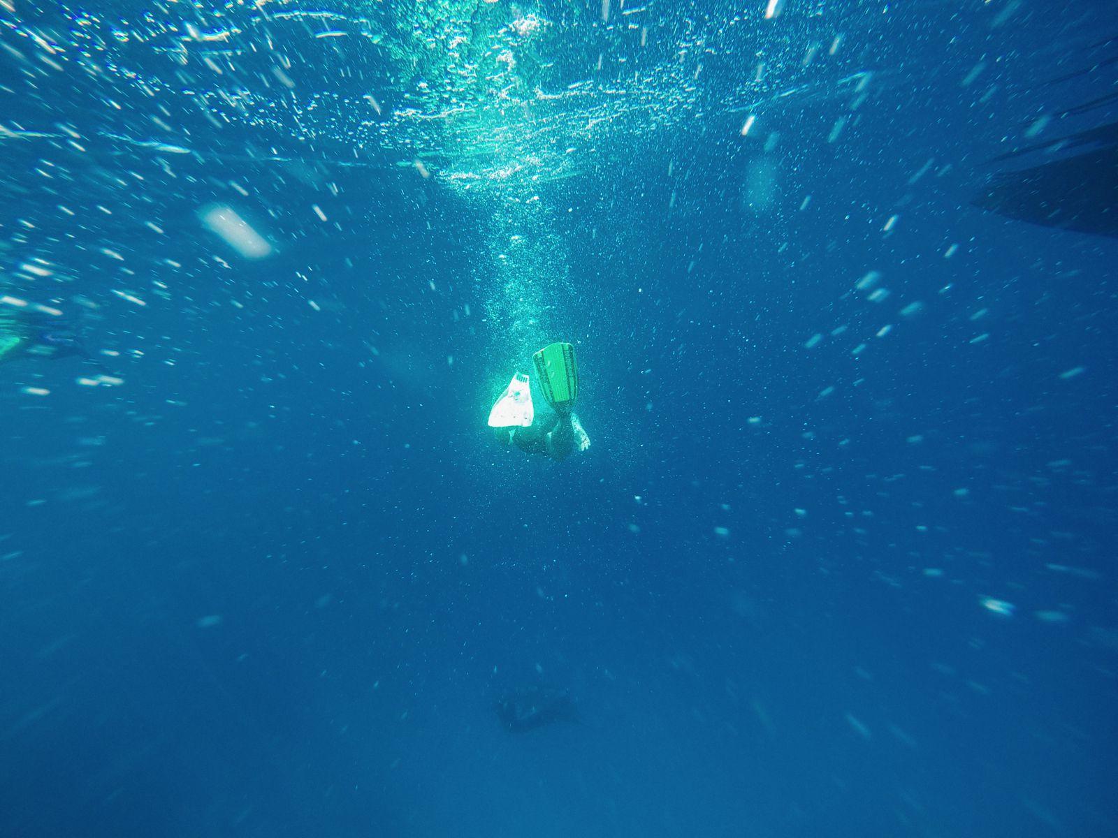 Maafushivaru, Birthing Dolphins And Swimming With Manta Rays... In The Maldives (57)