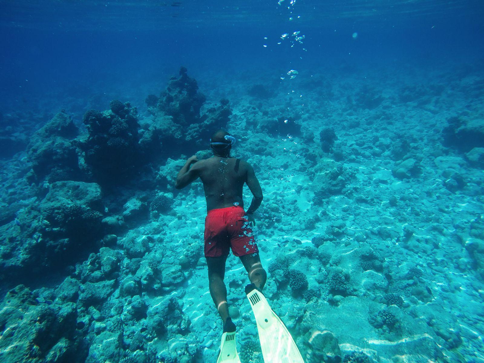 Maafushivaru, Birthing Dolphins And Swimming With Manta Rays... In The Maldives (63)