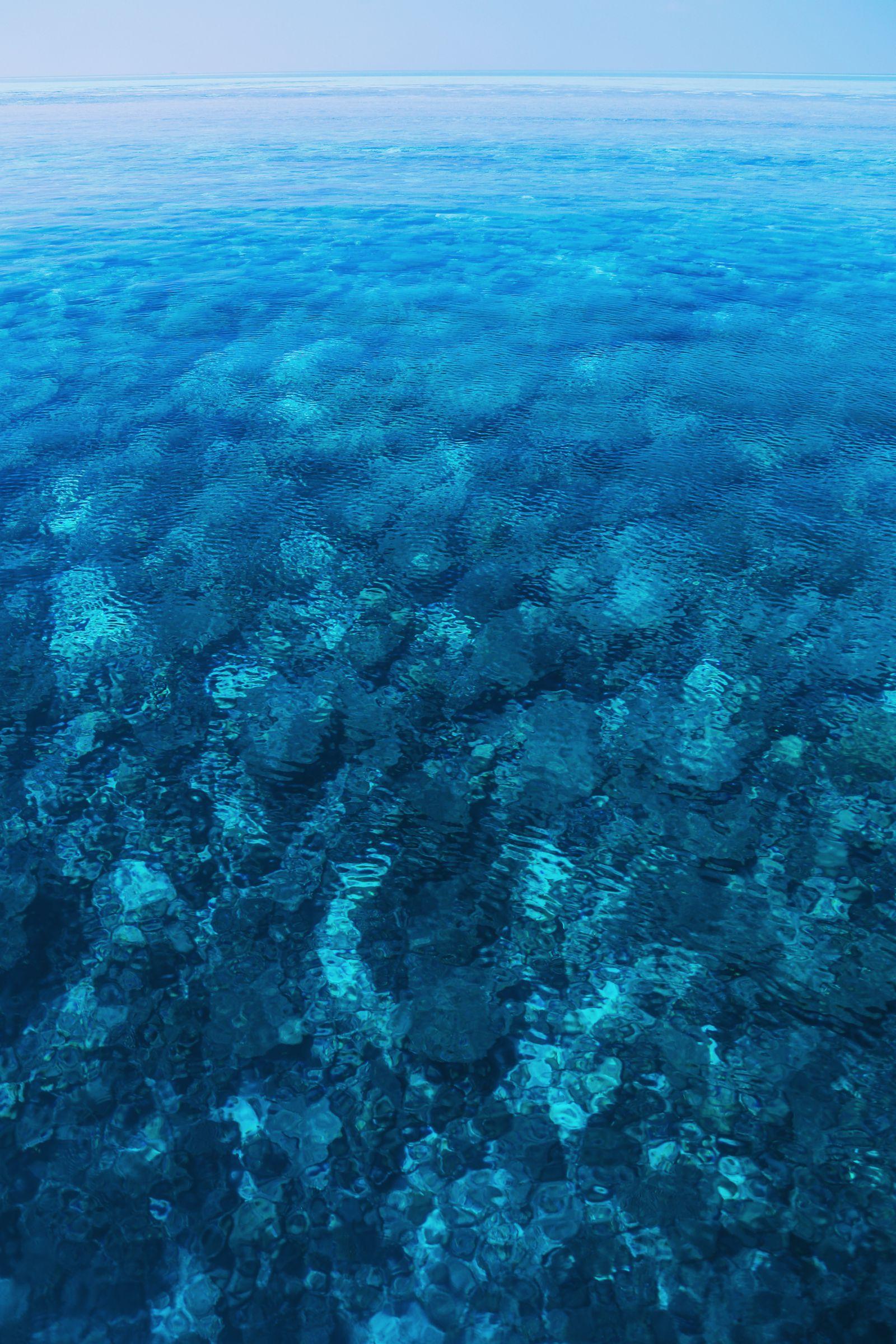 Maafushivaru, Birthing Dolphins And Swimming With Manta Rays... In The Maldives (69)
