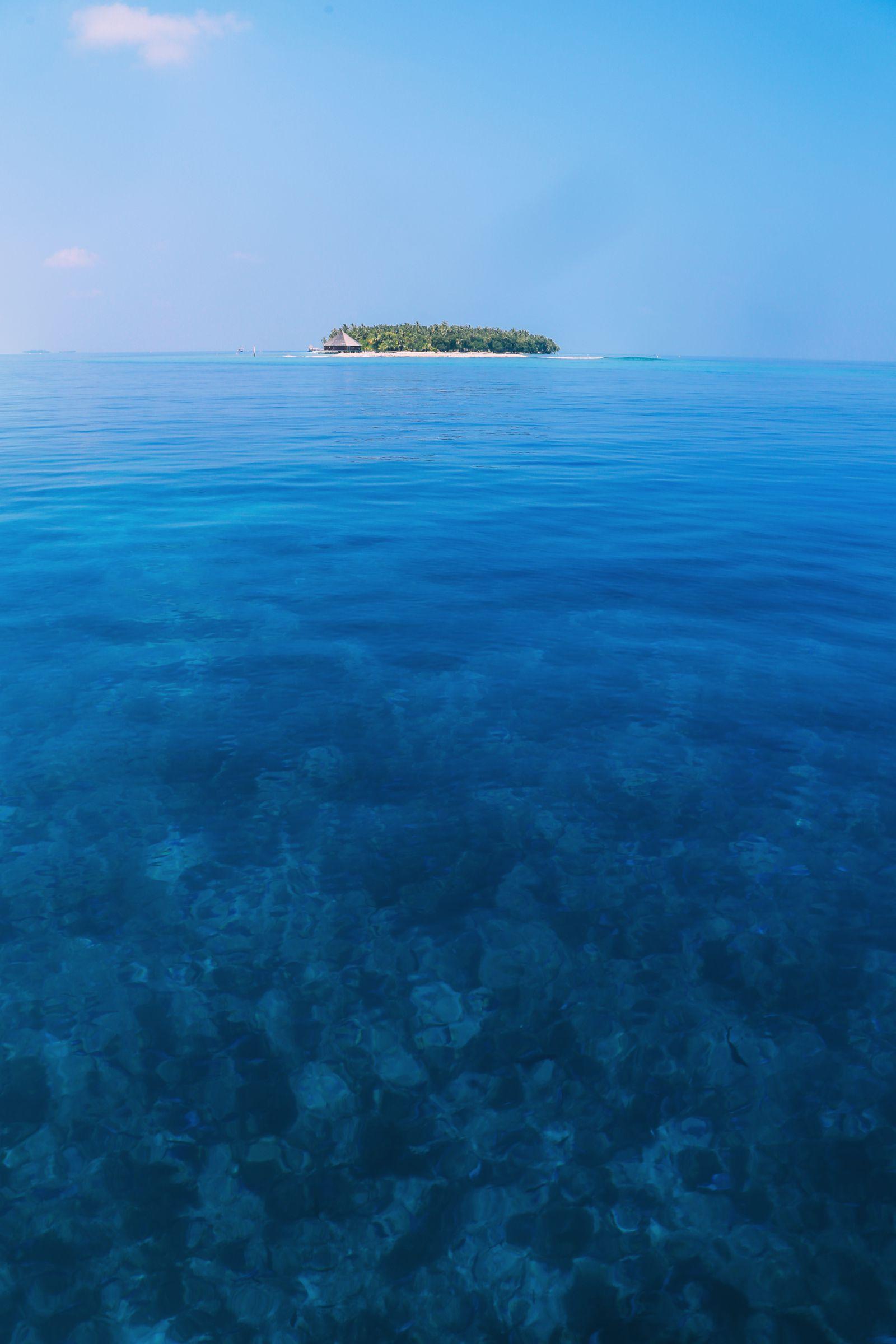 Maafushivaru, Birthing Dolphins And Swimming With Manta Rays... In The Maldives (74)