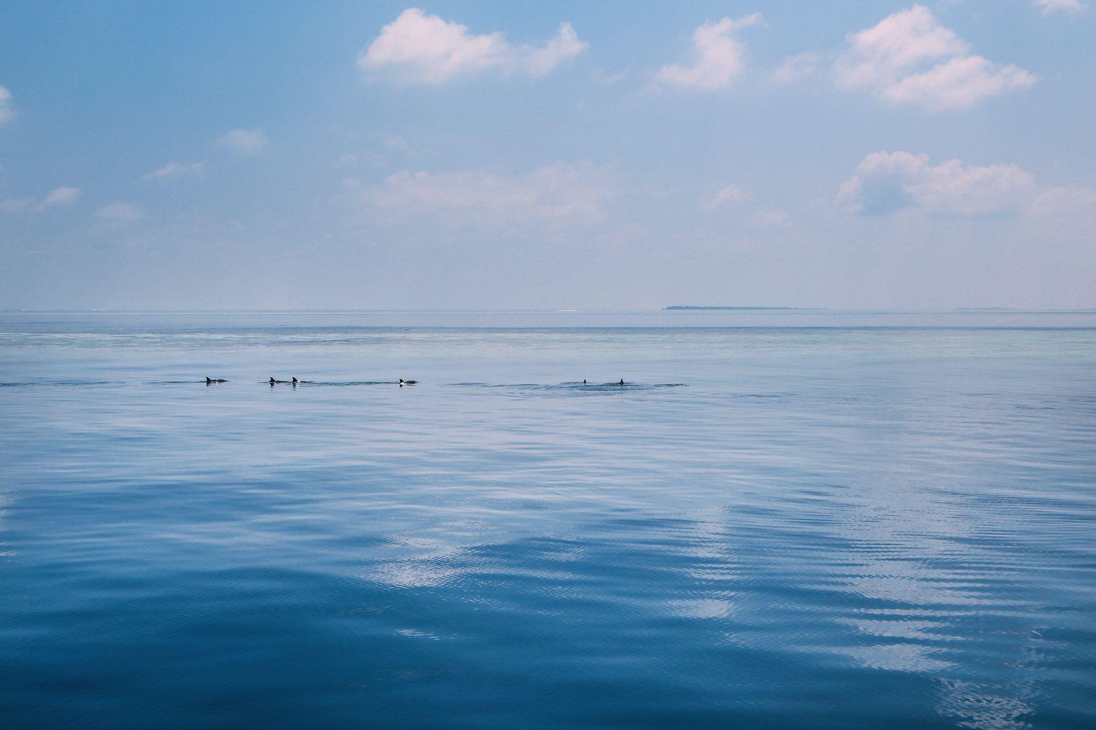 Maafushivaru, Birthing Dolphins And Swimming With Manta Rays... In The Maldives (77)