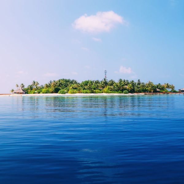 Maafushivaru, Birthing Dolphins And Swimming With Manta Rays... In The Maldives (79)