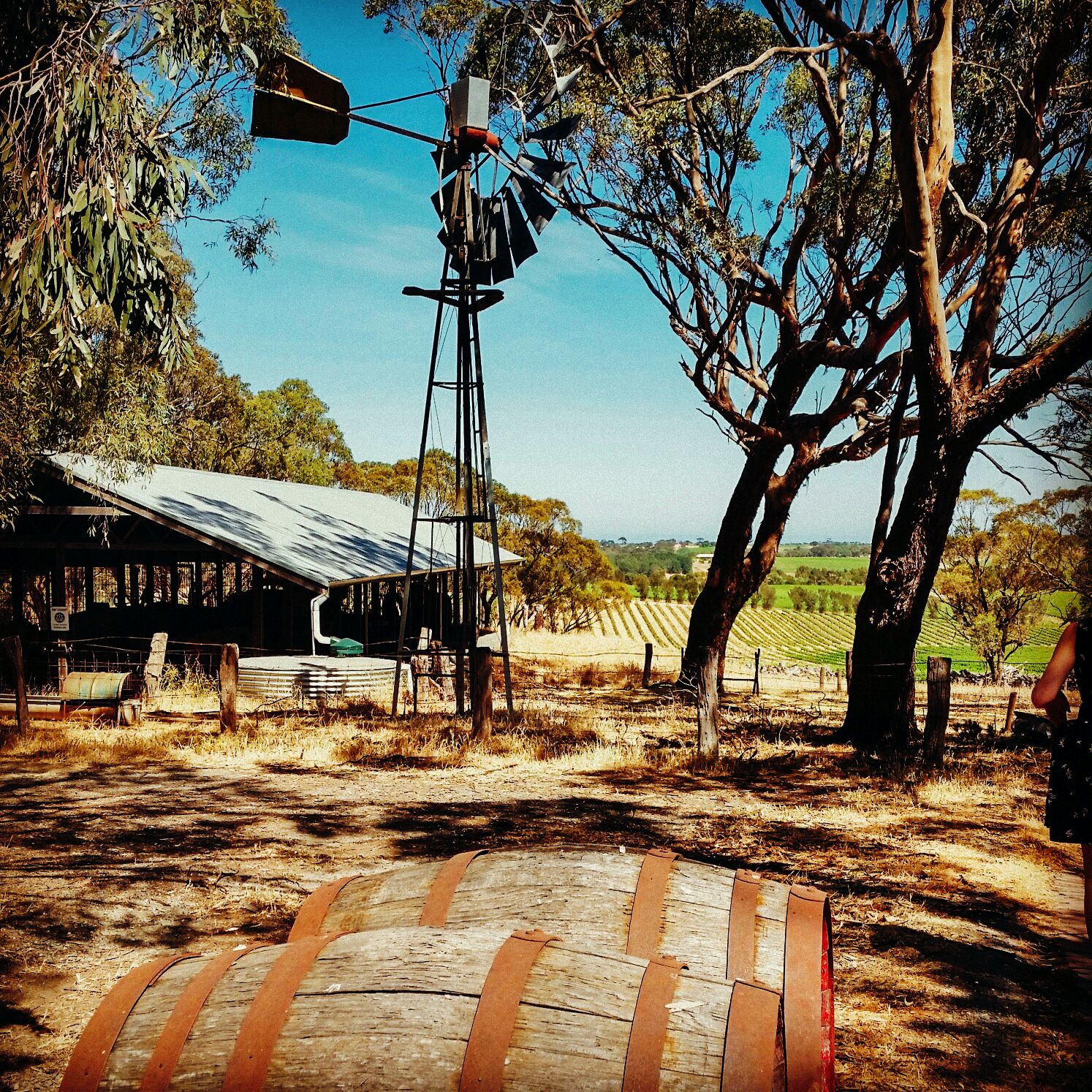 10 Incredible Vineyards You Have To Visit In Australia (11)
