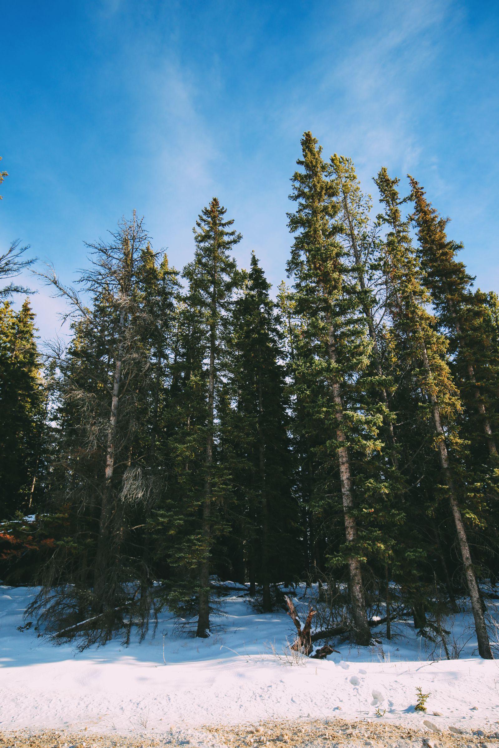 The Amazing Beauty Of Jasper National Park... In Alberta, Canada (26)