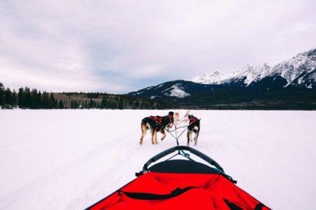 Dog Sledding In Jasper And Ice Hockey In Edmonton - 2 Canadian 'Must-Do's! (19)
