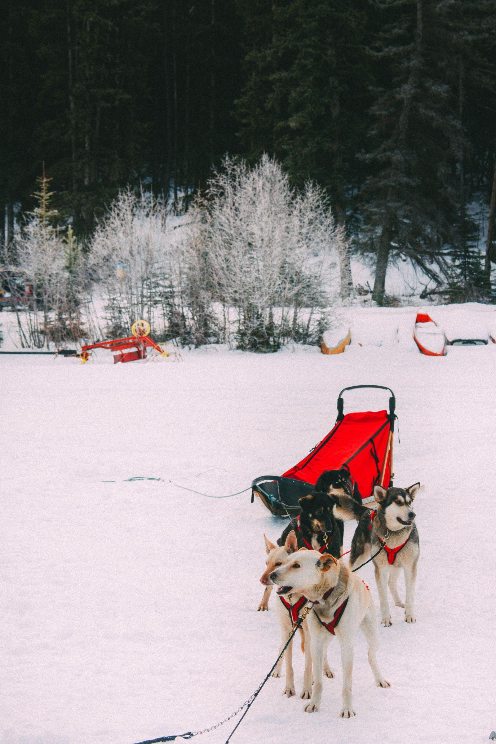 Dog Sledding In Jasper And Ice Hockey In Edmonton - 2 Canadian 'Must-Do's! (22)