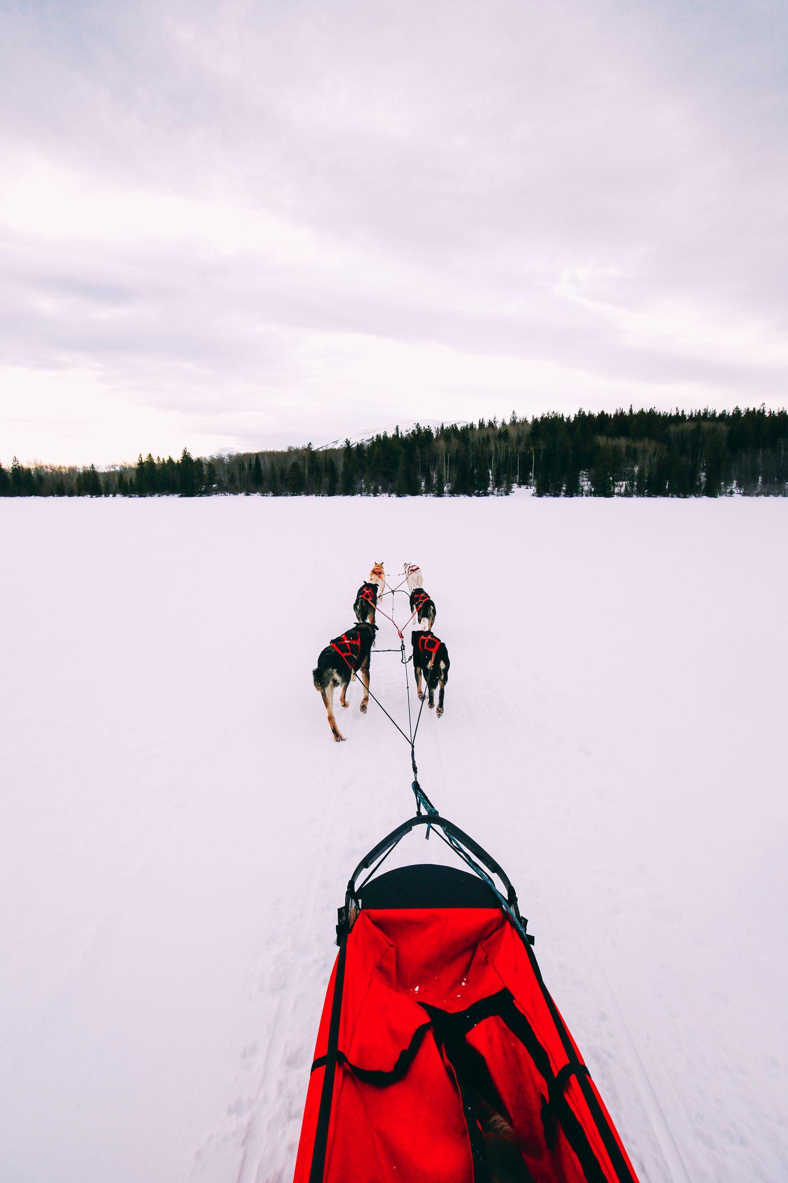 Dog Sledding In Jasper And Ice Hockey In Edmonton - 2 Canadian 'Must-Do's! (24)