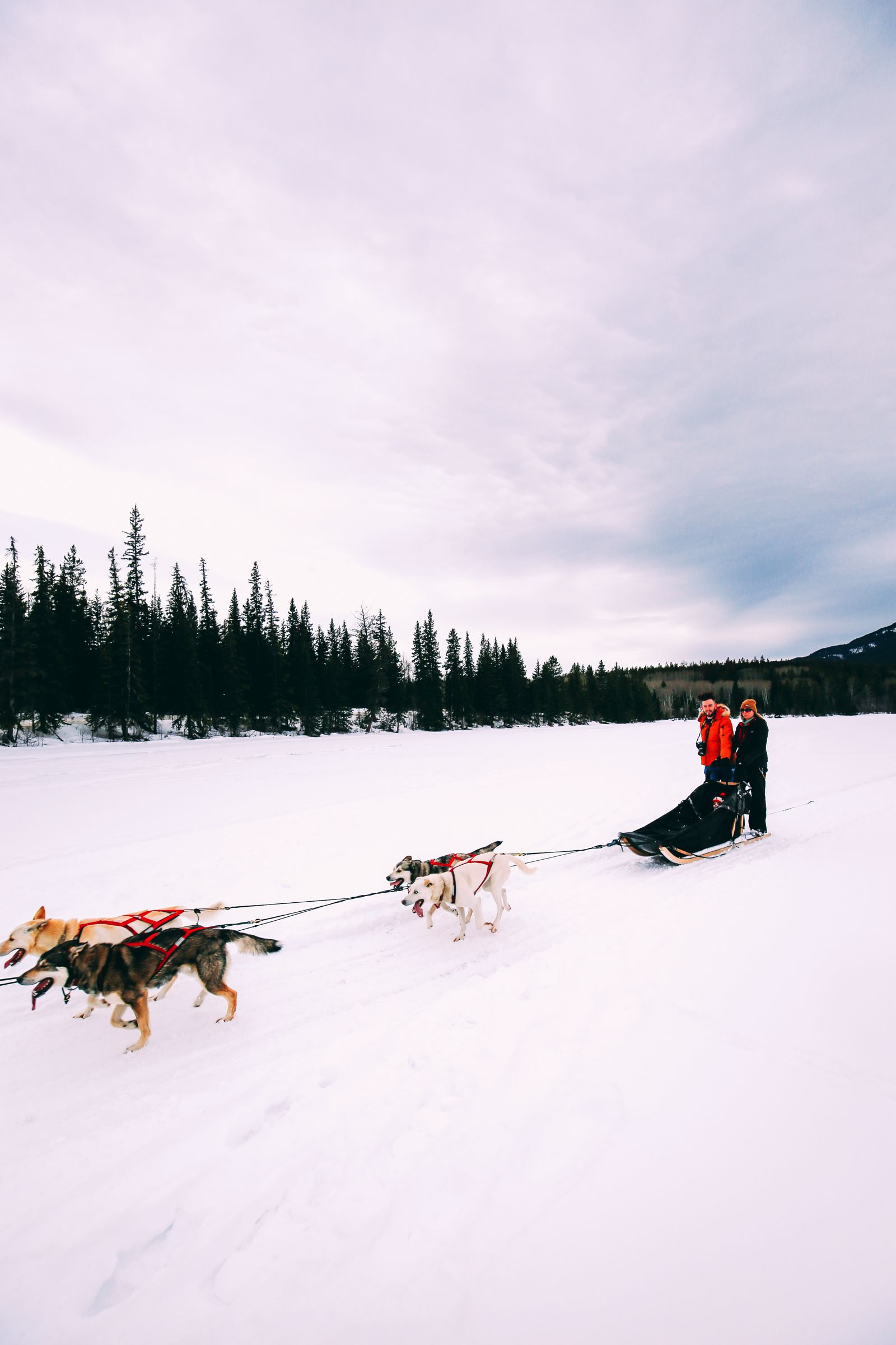 Dog Sledding In Jasper And Ice Hockey In Edmonton - 2 Canadian 'Must-Do's! (26)