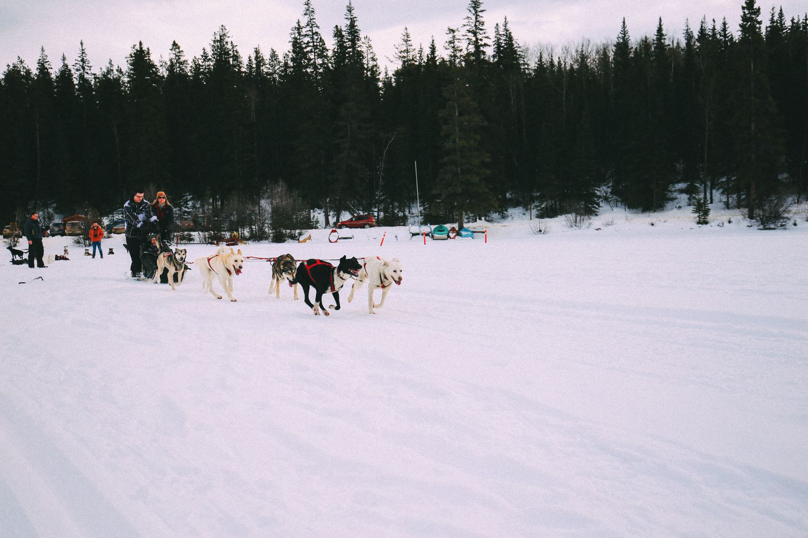 Dog Sledding In Jasper And Ice Hockey In Edmonton - 2 Canadian 'Must-Do's! (28)