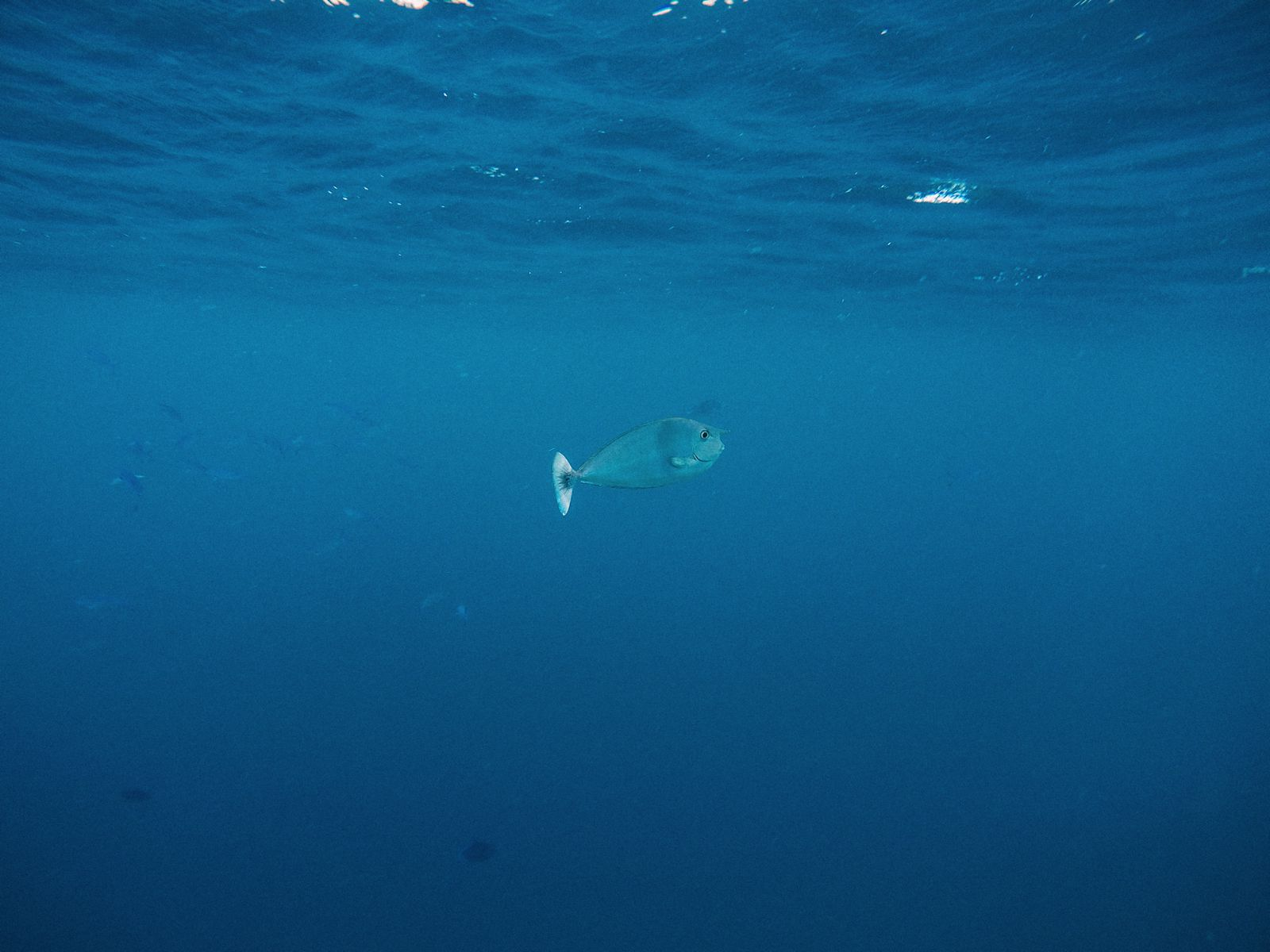 Swimming With Wild Turtles And Those Amazing Island Colours... At Kandolhu Island, Maldives (14)