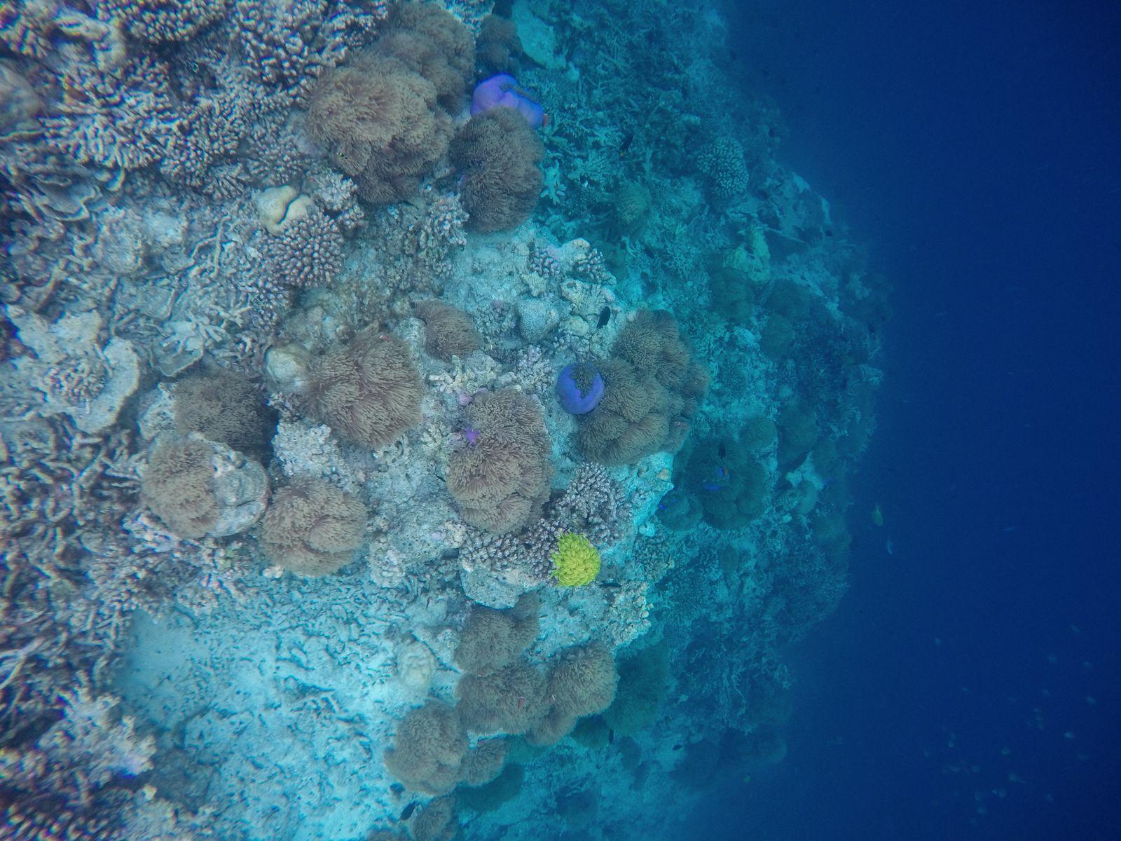 Swimming With Wild Turtles And Those Amazing Island Colours... At Kandolhu Island, Maldives (19)