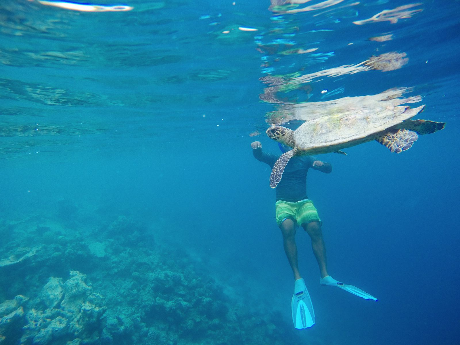 Swimming With Wild Turtles And Those Amazing Island Colours... At Kandolhu Island, Maldives (22)