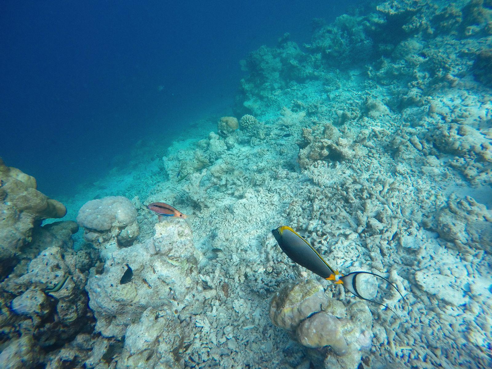 Swimming With Wild Turtles And Those Amazing Island Colours... At Kandolhu Island, Maldives (31)