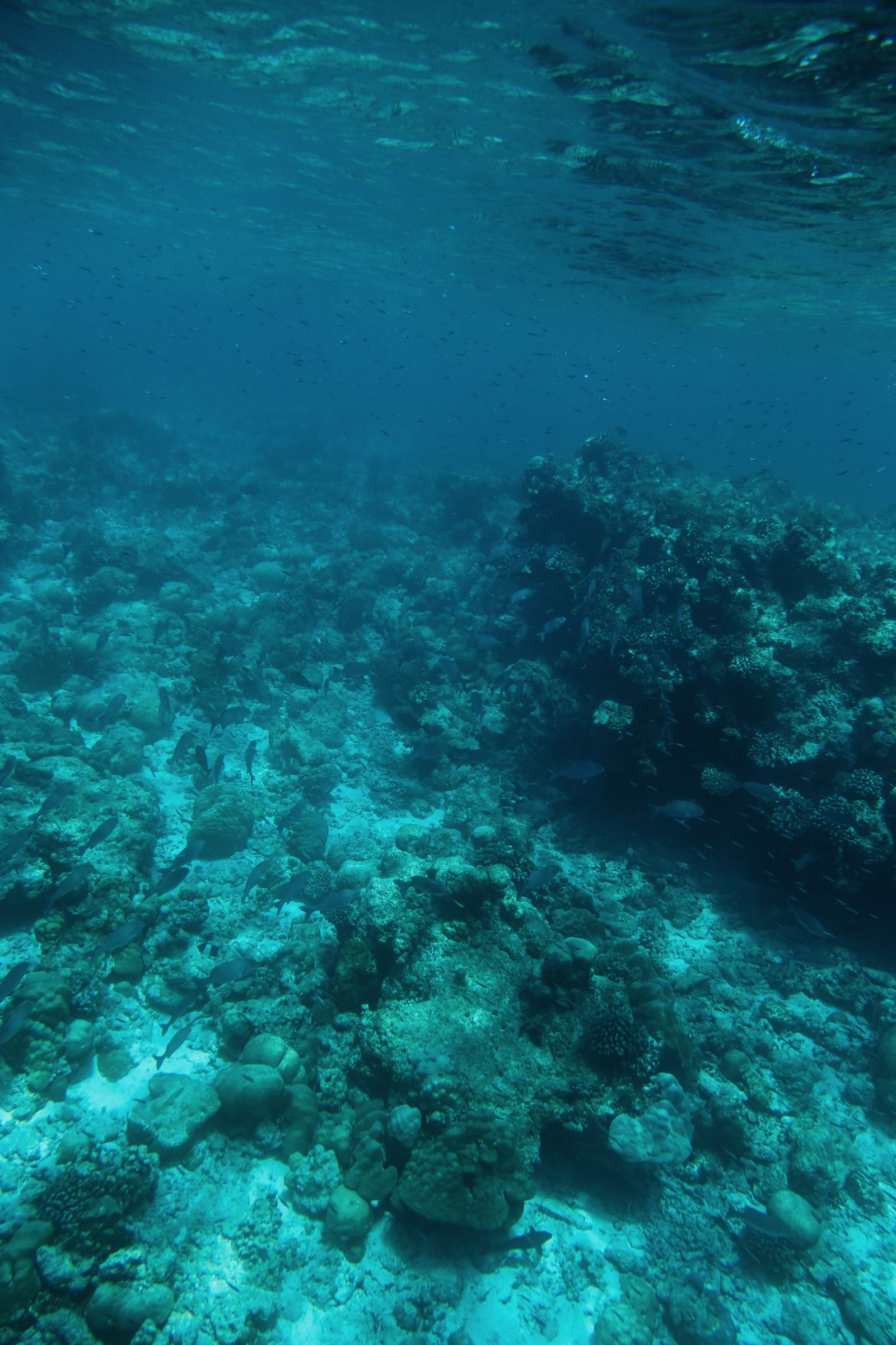 The Perfectly Lazy Day... In Kuramathi Island Maldives (13)