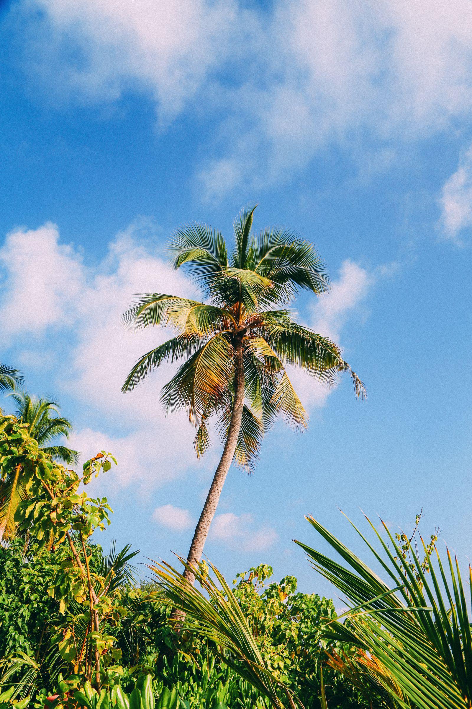 The Perfectly Lazy Day... In Kuramathi Island Maldives (48)