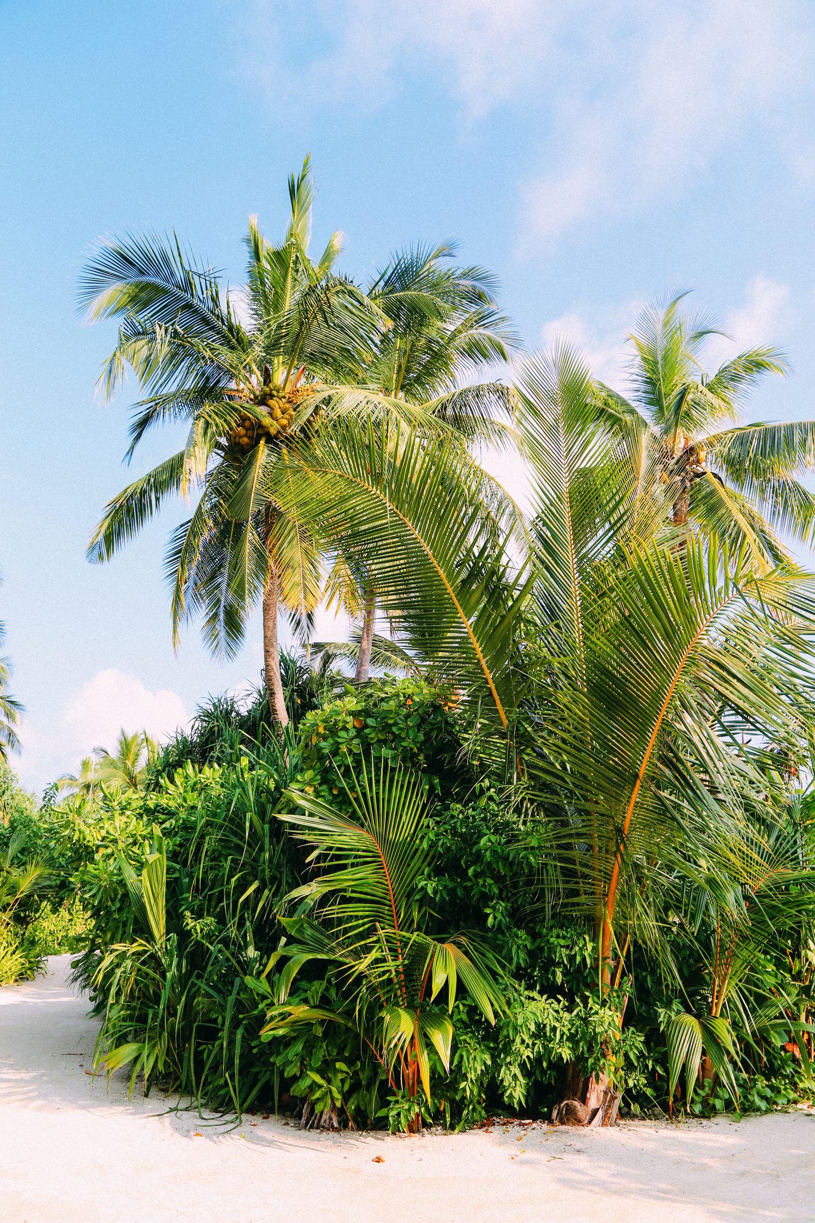 The Perfectly Lazy Day... In Kuramathi Island Maldives (50)
