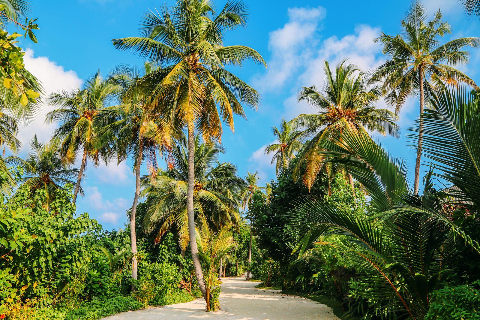 The Perfectly Lazy Day... In Kuramathi Island Maldives (52)