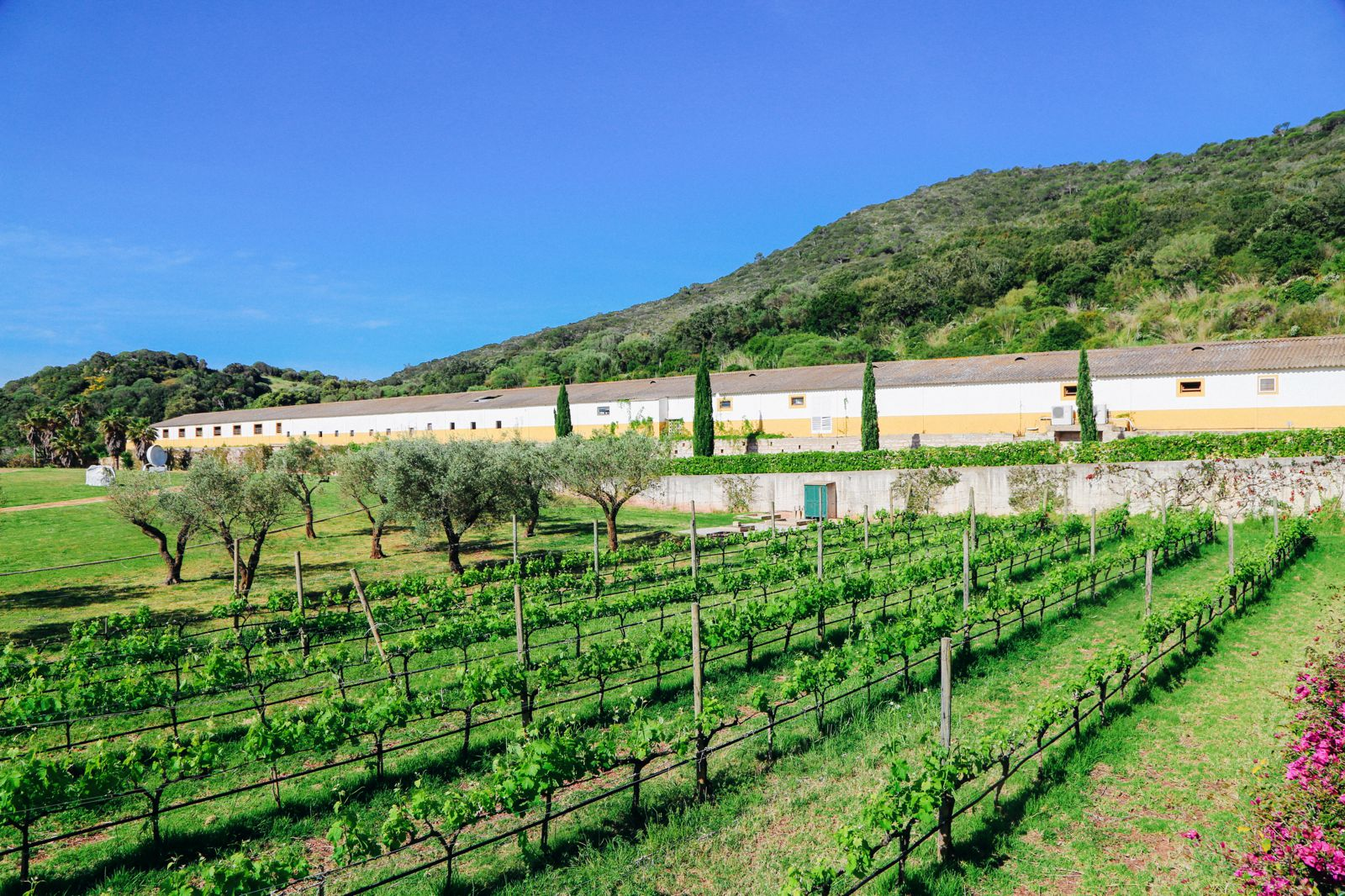 Vineyards, Seasides And Tapas... In Menorca, Spain (37)