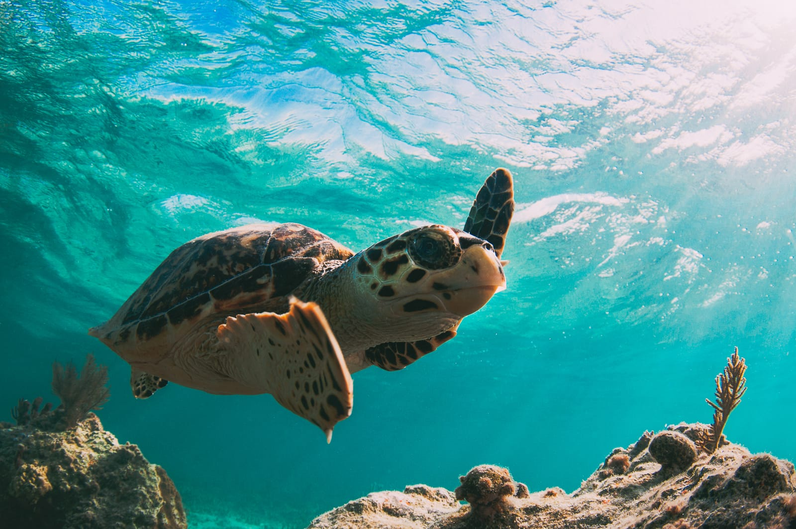 Best Things To Do In The Bahamas (24)