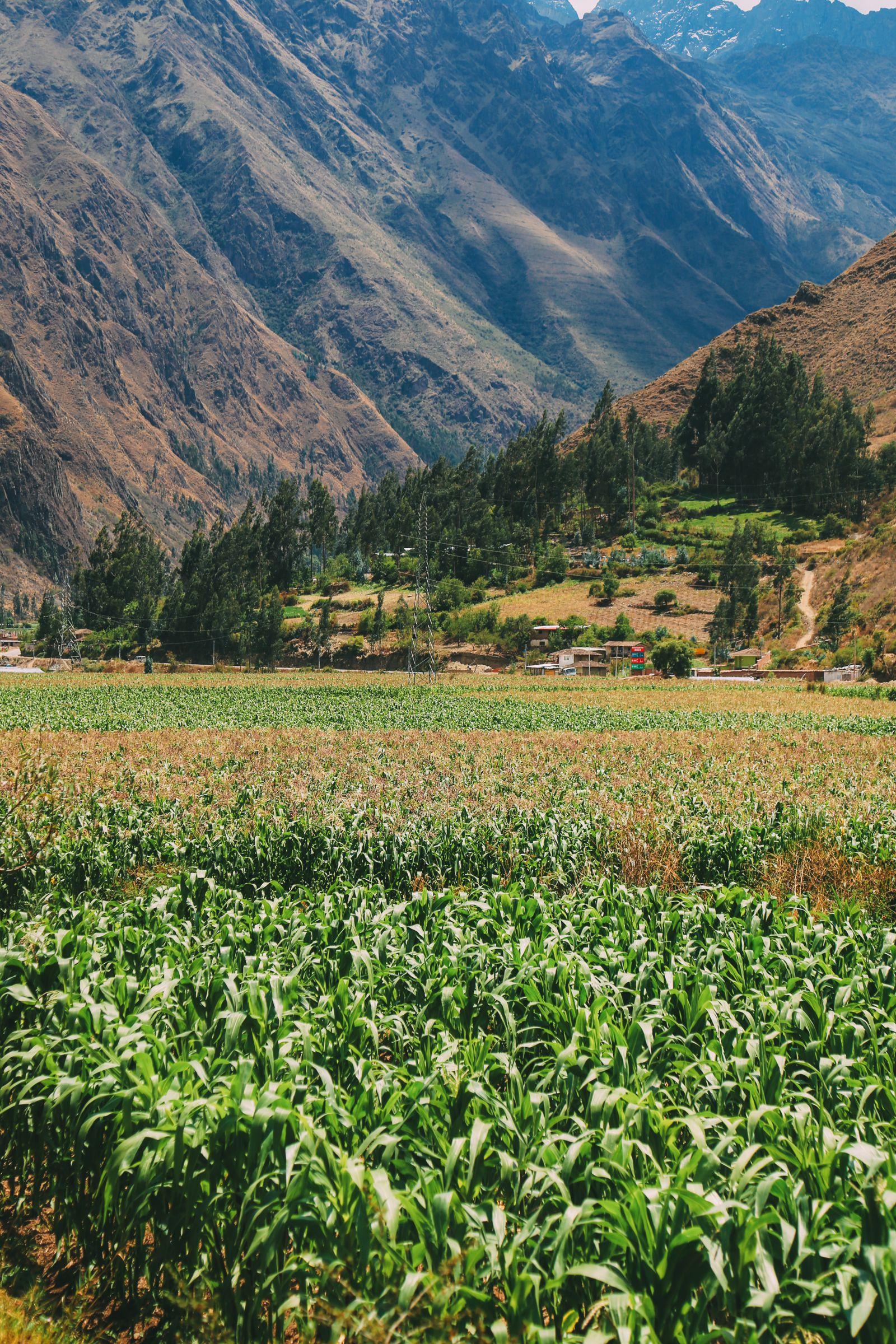 The Journey Up To Machu Picchu Village - Aguas Calientes, Peru (21)