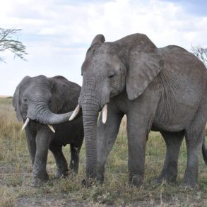 14 Of The Best Places To Safari In Africa (2)