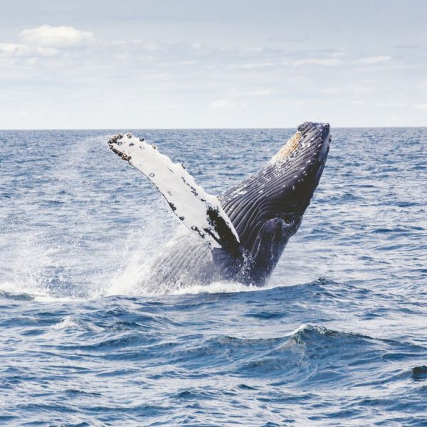 Best Places To Go Whale Watching Across The World (8)