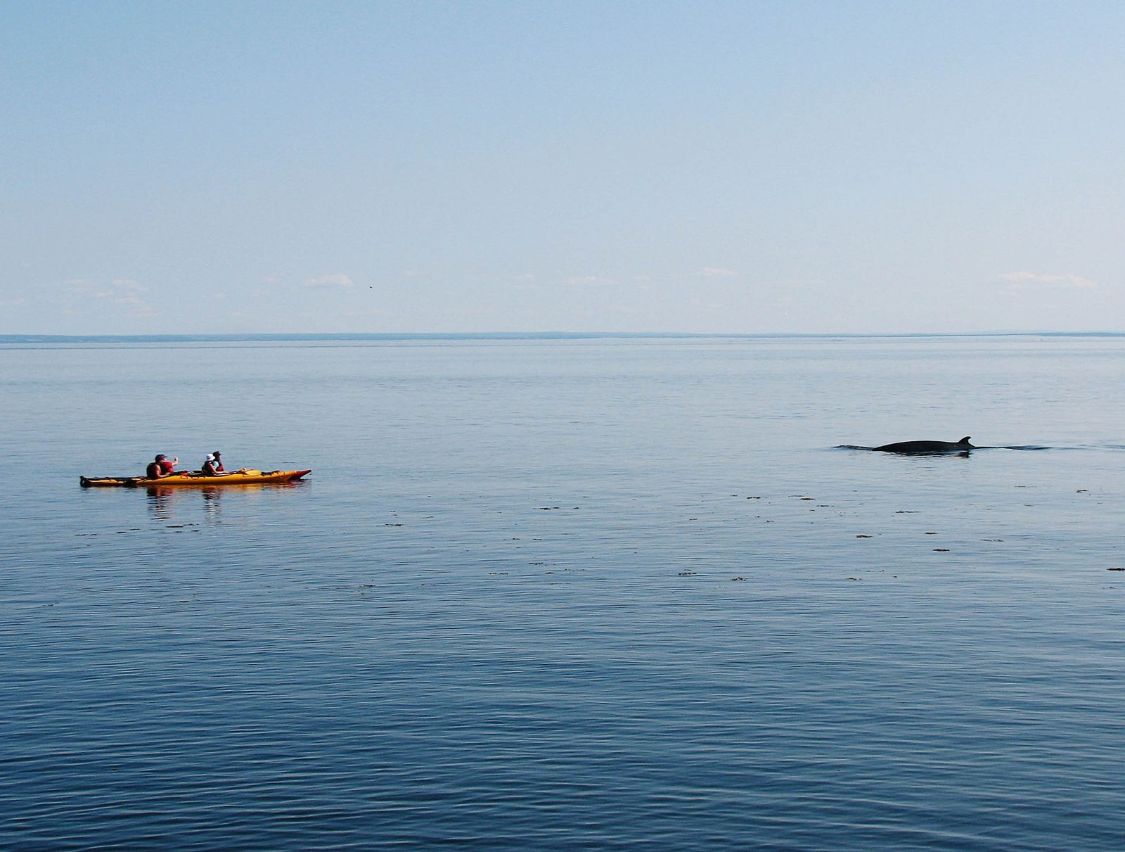 Best Places To Go Whale Watching Across The World (3)