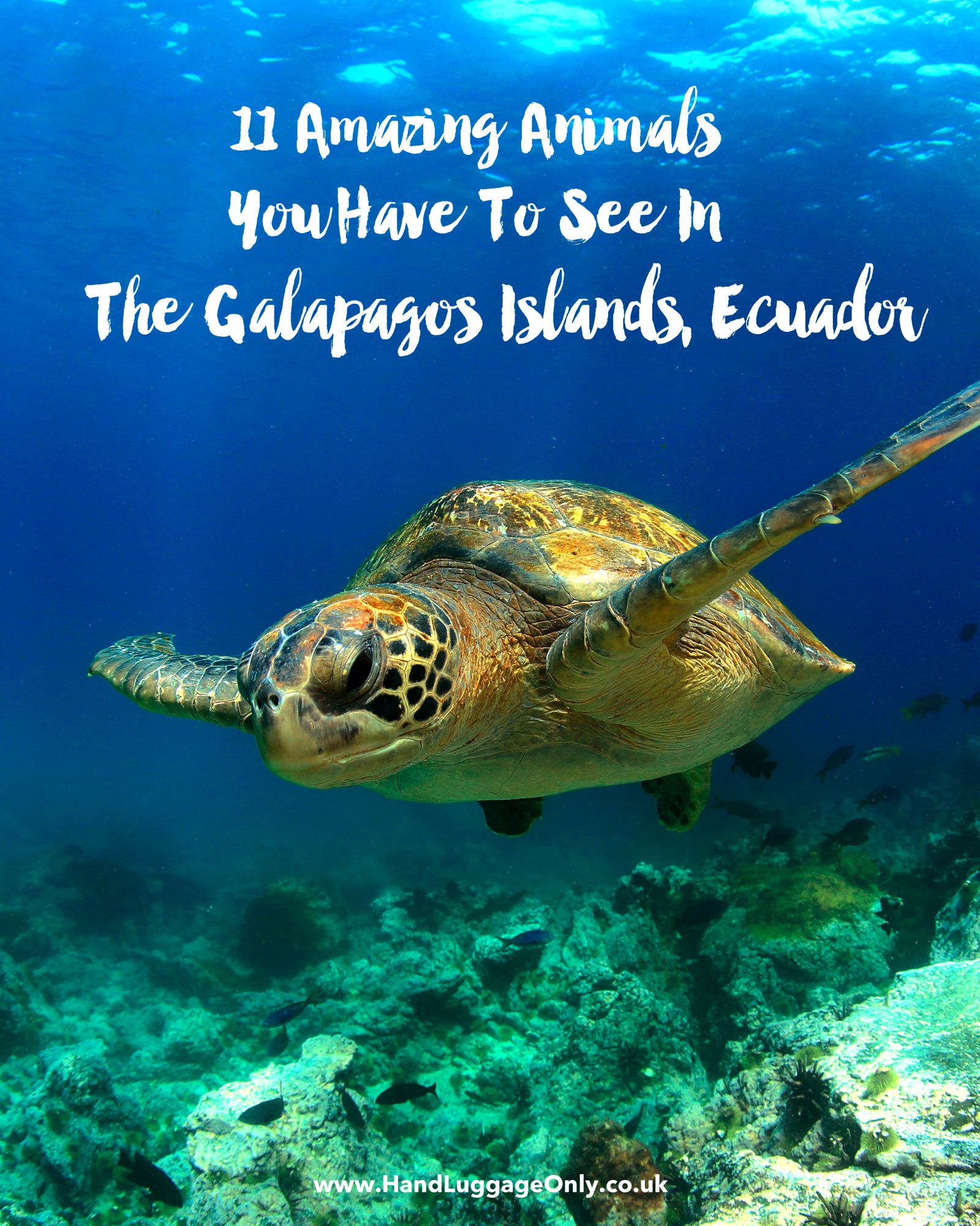 11 Amazing And Unique Animals You Have To See In The Galapagos Islands, Ecuador (1)