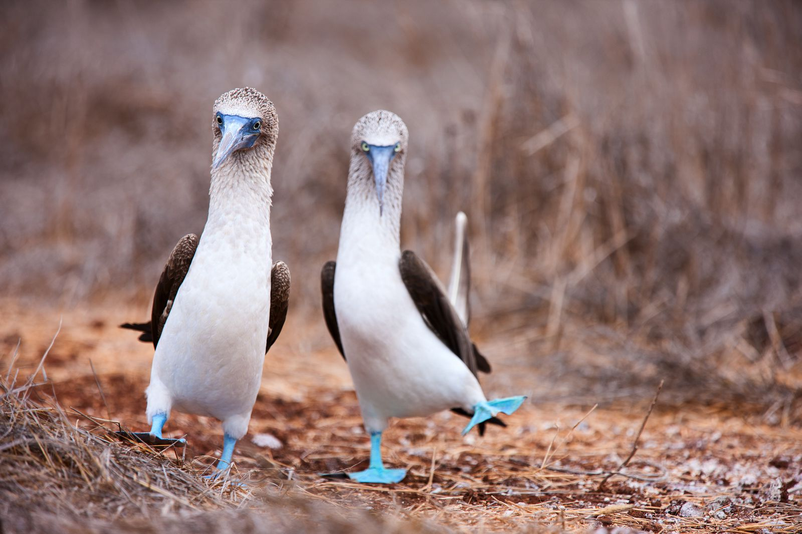 11 Amazing And Unique Animals You Have To See In The Galapagos Islands, Ecuador (9)