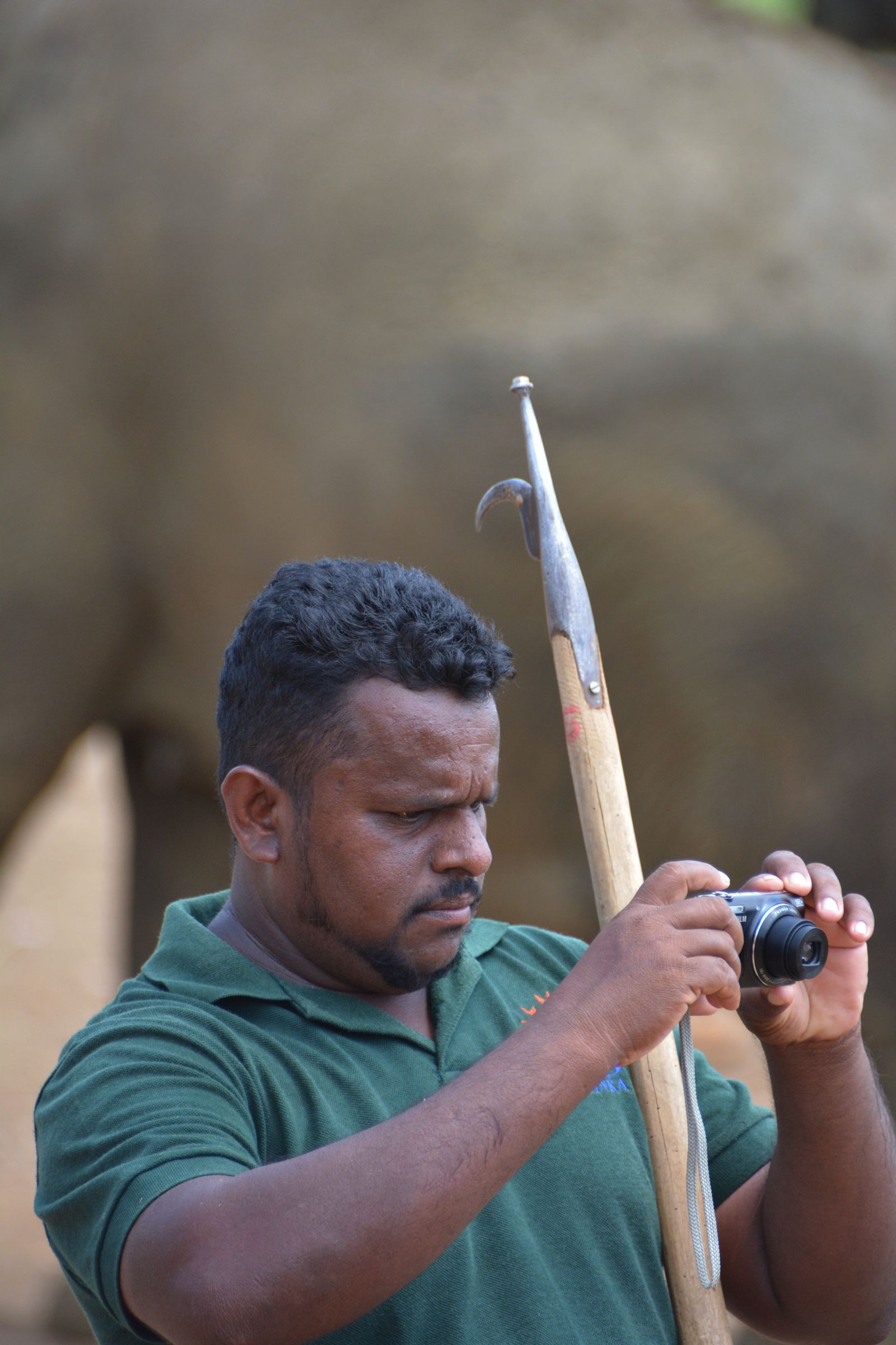 Here's Why You Should Never Visit Pinnawala Elephant Orphanage In Sri Lanka 2017 (2)