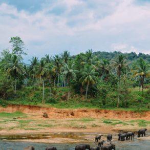 Here's Why You Should Never Visit Pinnawala Elephant Orphanage In Sri Lanka 2017 (6)