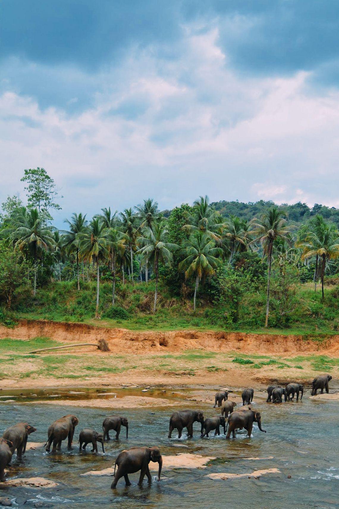 Here's Why You Should Never Visit Pinnawala Elephant Orphanage In Sri Lanka (2)