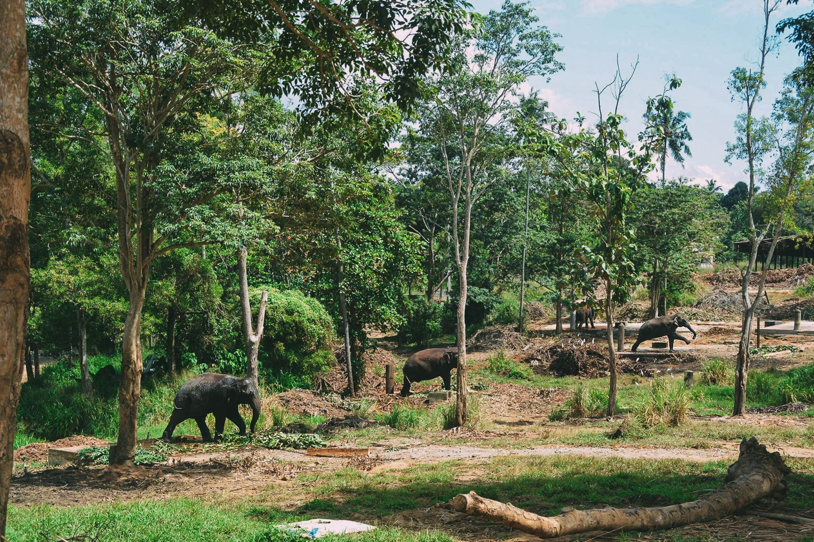 Here's Why You Should Never Visit Pinnawala Elephant Orphanage In Sri Lanka (3)