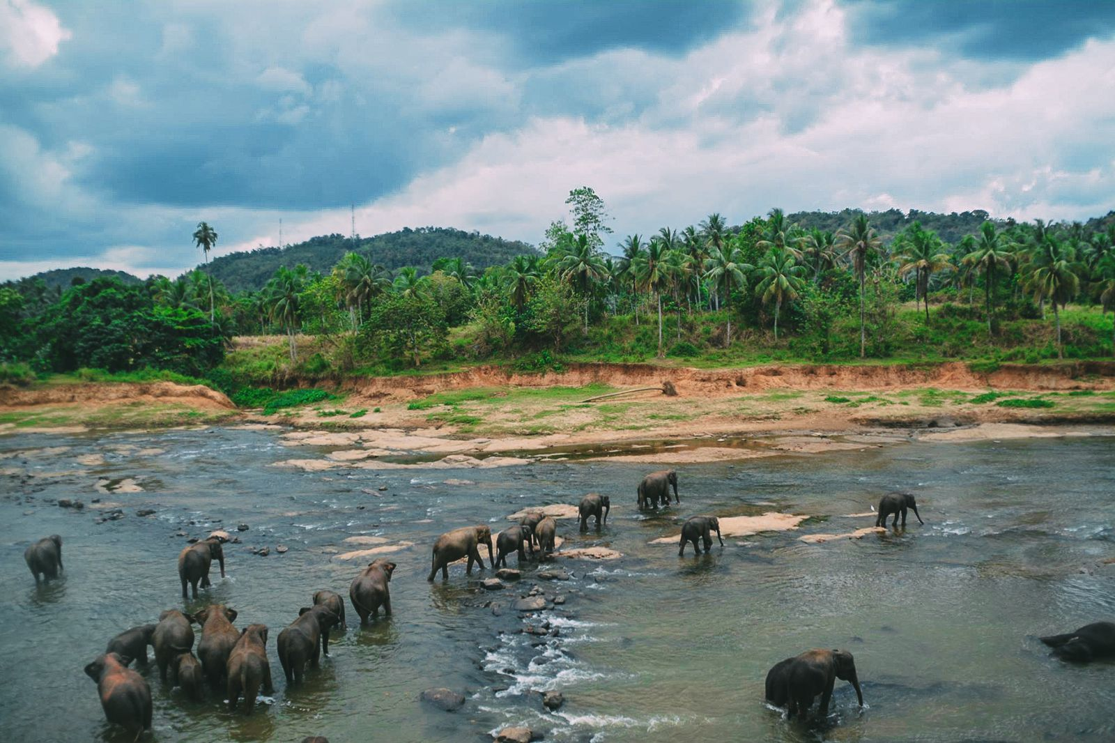 Here's Why You Should Never Visit Pinnawala Elephant Orphanage In Sri Lanka 2017 (10)
