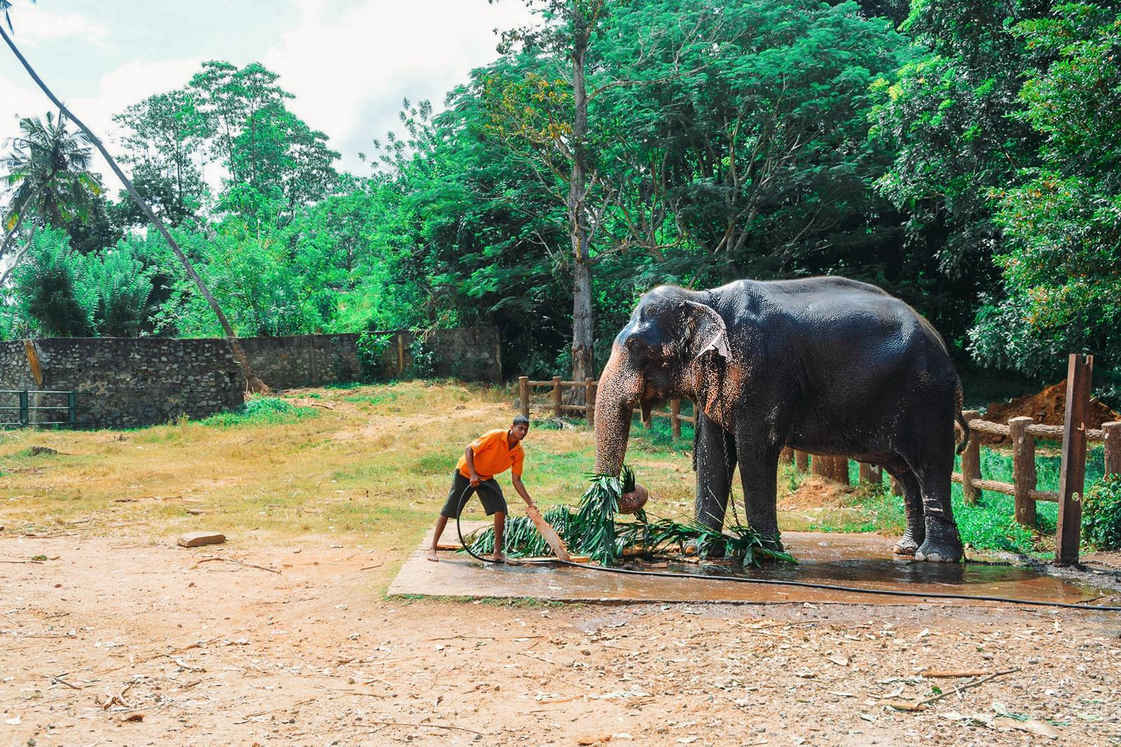 Here's Why You Should Never Visit Pinnawala Elephant Orphanage In Sri Lanka (11)