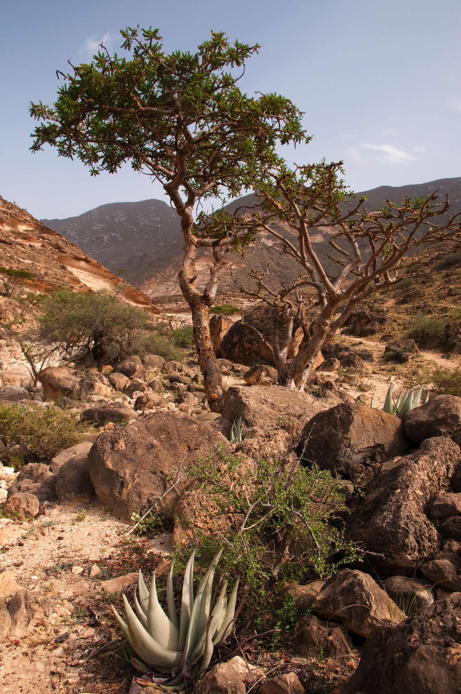 11 Beautiful And Surprising Places You Have To Visit In Oman (2)