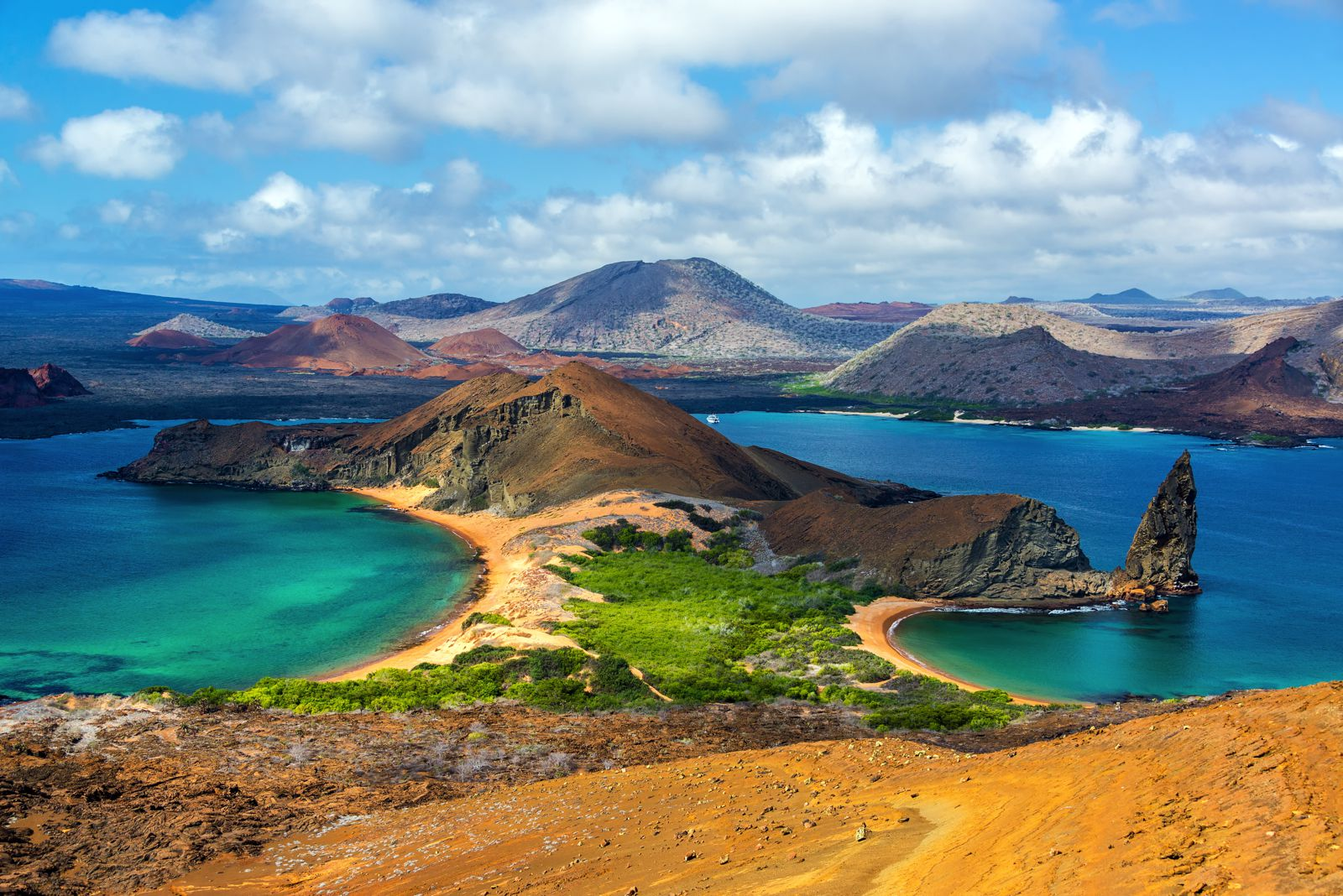11 Amazing And Unique Animals You Have To See In The Galapagos Islands, Ecuador (13)