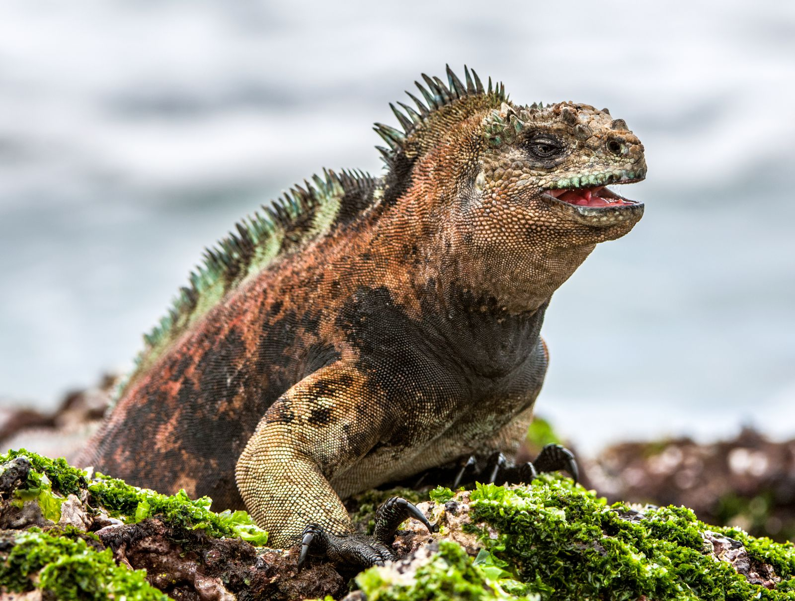 11 Amazing And Unique Animals You Have To See In The Galapagos Islands, Ecuador (4)