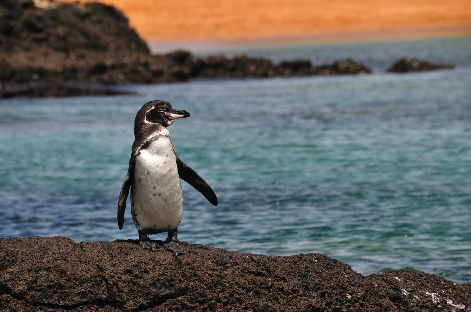11 Amazing And Unique Animals You Have To See In The Galapagos Islands, Ecuador (8)