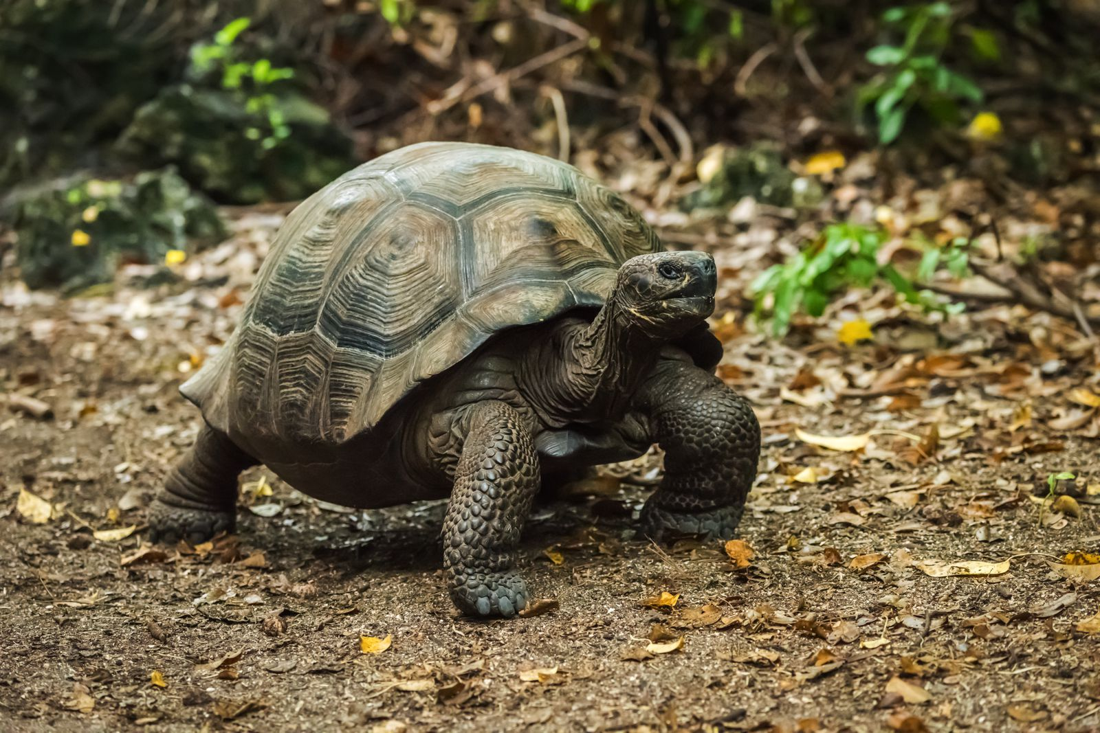 11 Amazing And Unique Animals You Have To See In The Galapagos Islands, Ecuador (3)