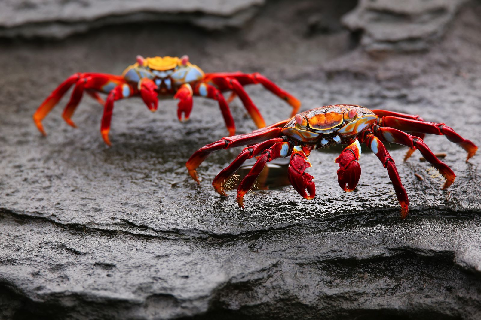 11 Amazing And Unique Animals You Have To See In The Galapagos Islands, Ecuador (2)
