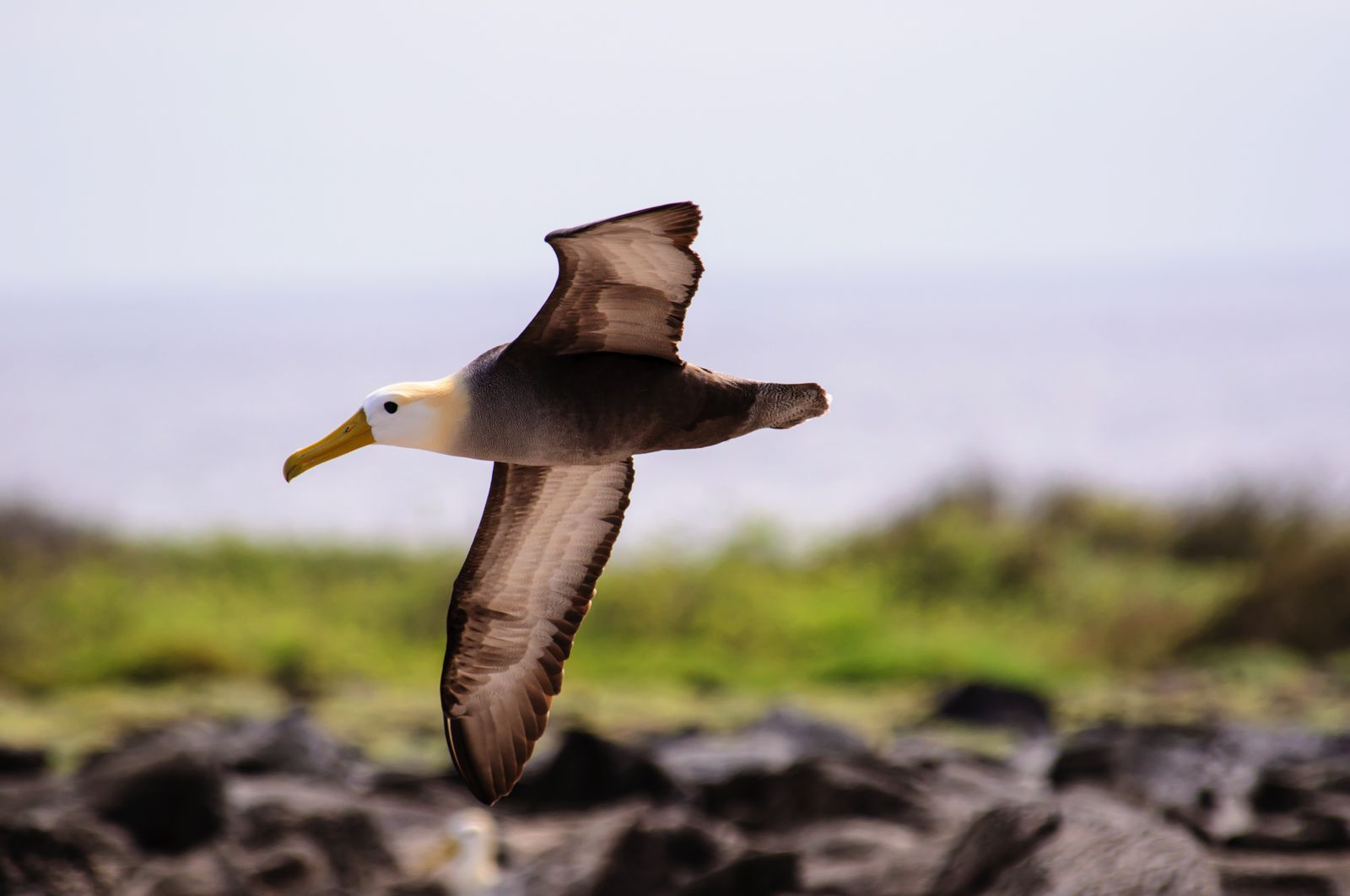 11 Amazing And Unique Animals You Have To See In The Galapagos Islands, Ecuador (10)