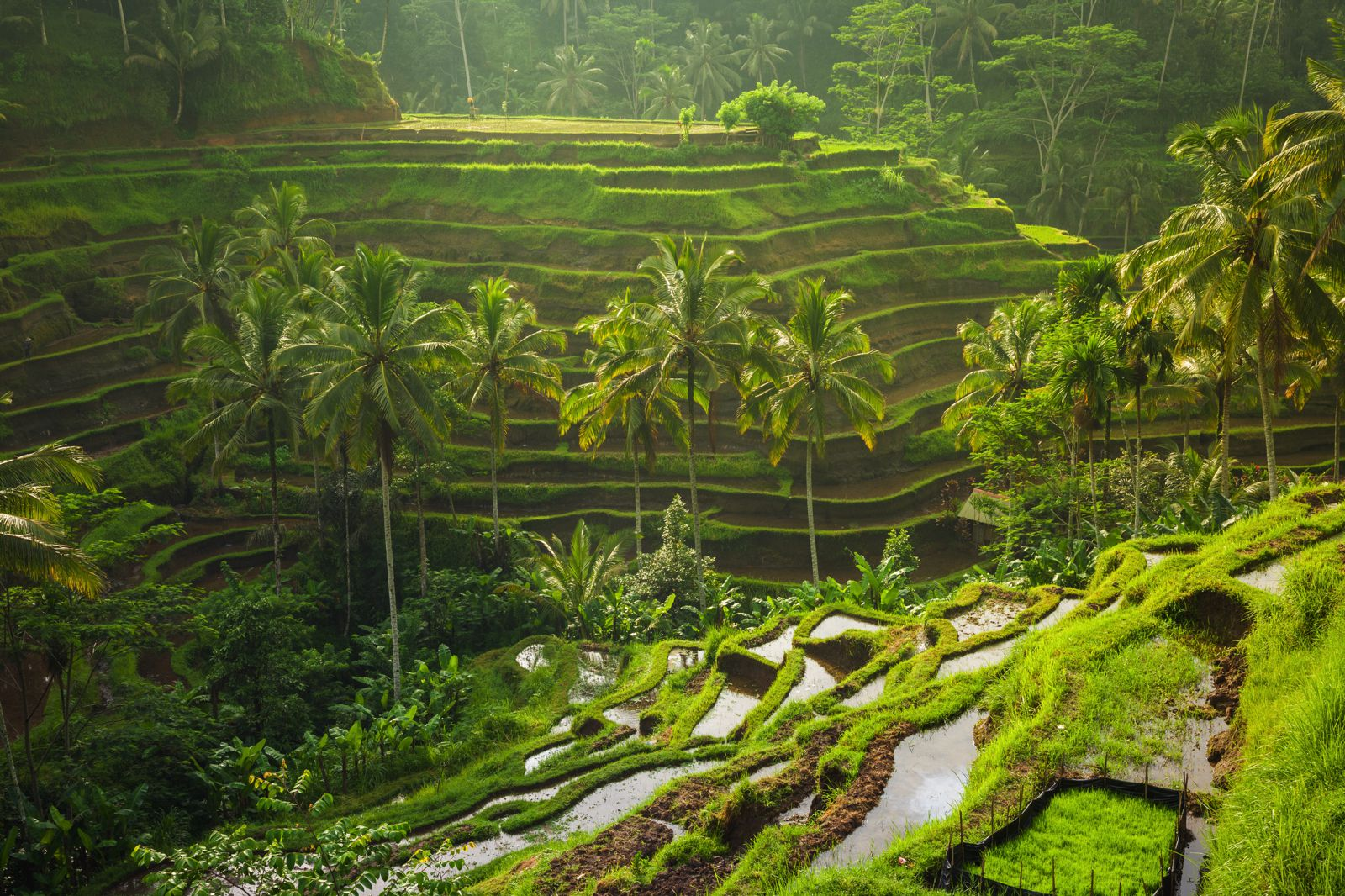 Complete Guide Of Things To See in Bali Guide (32)