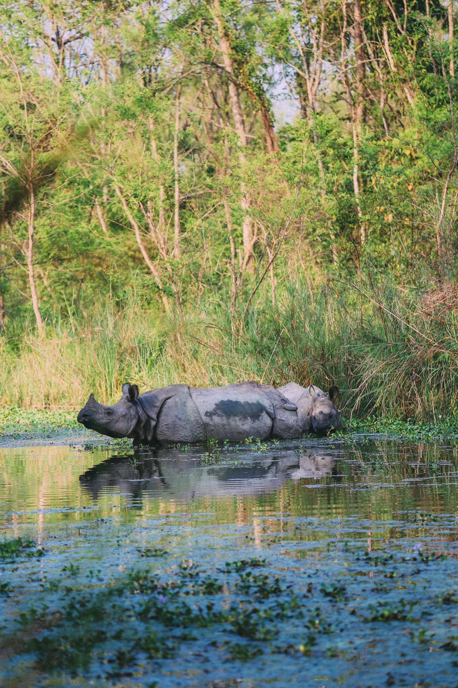 The Search For The One-Horned Rhino... In Chitwan, Nepal (31)