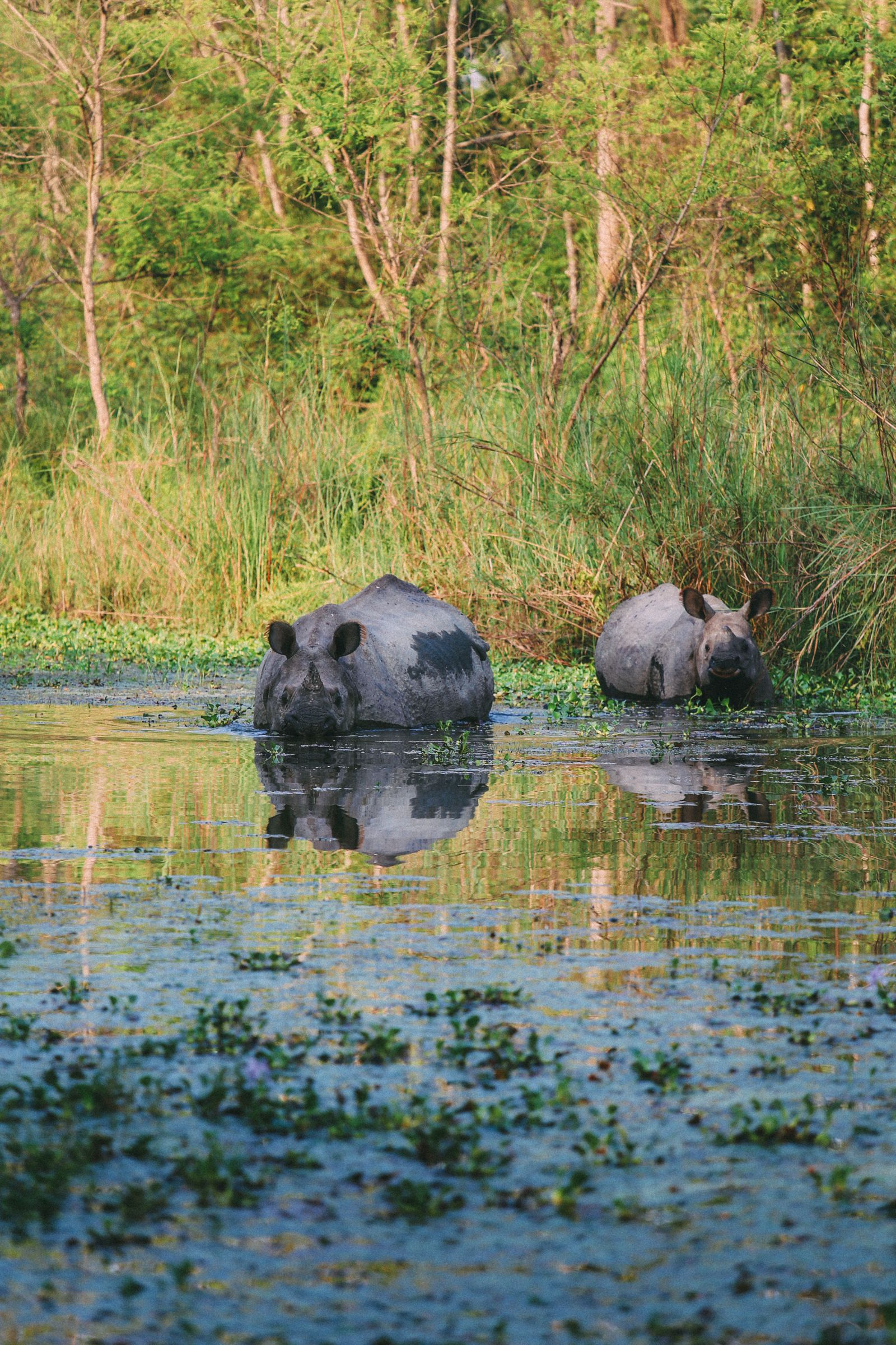 The Search For The One-Horned Rhino... In Chitwan, Nepal (32)