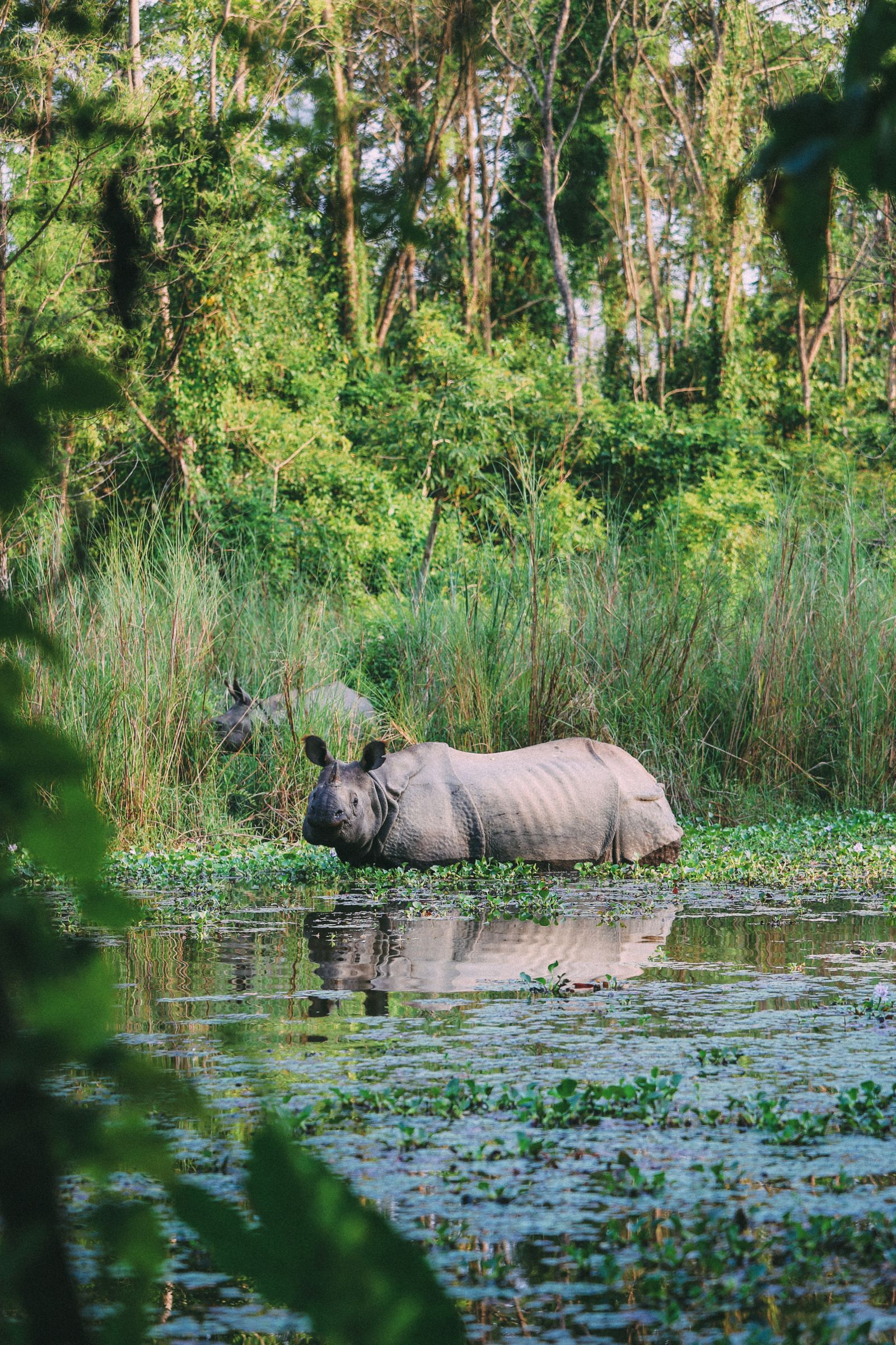 The Search For The One-Horned Rhino... In Chitwan, Nepal (38)