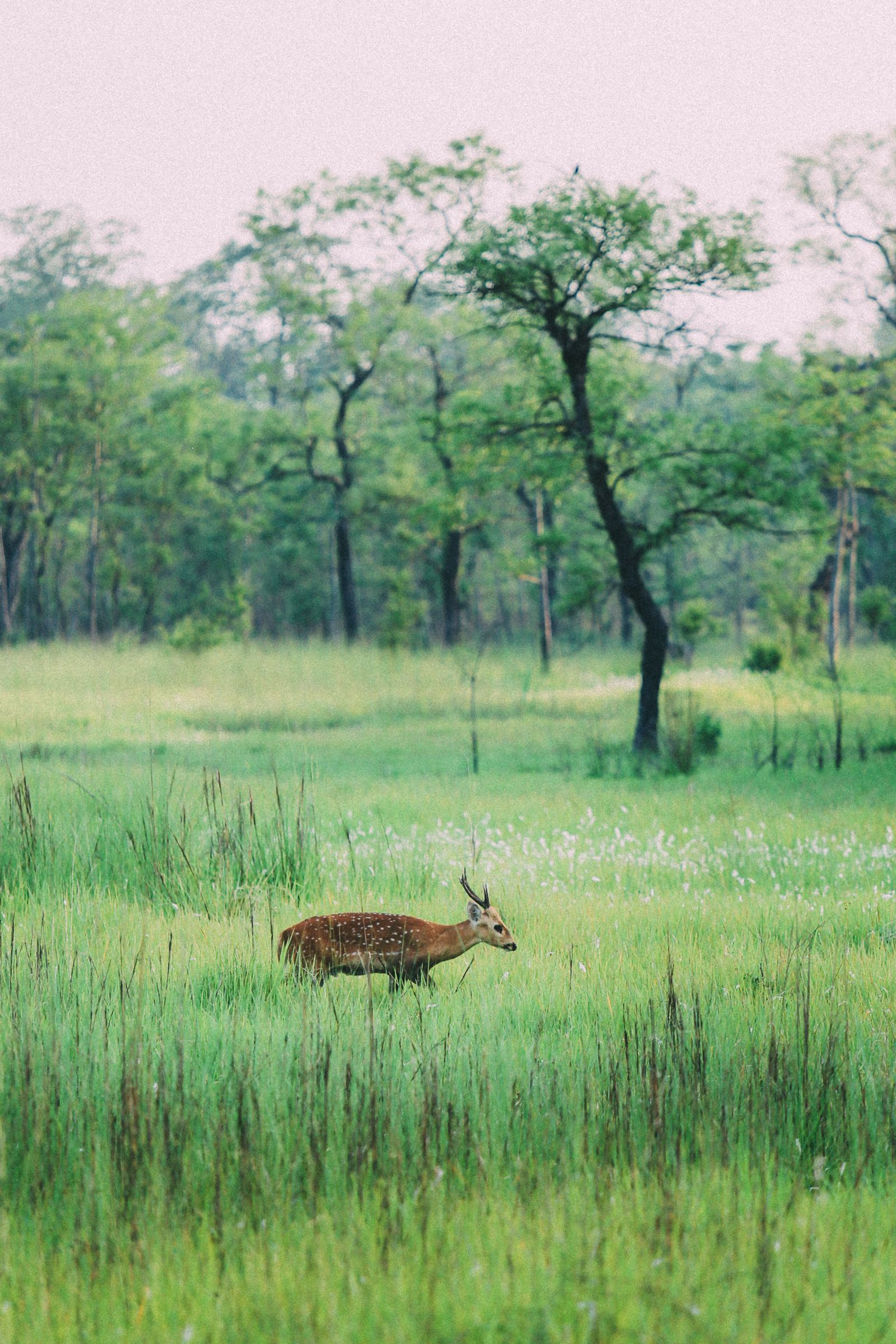 The Search For The One-Horned Rhino... In Chitwan, Nepal (52)