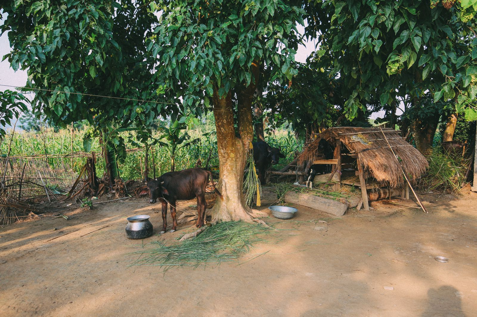 The Sights, Sounds And People Of Chitwan, Nepal (14)