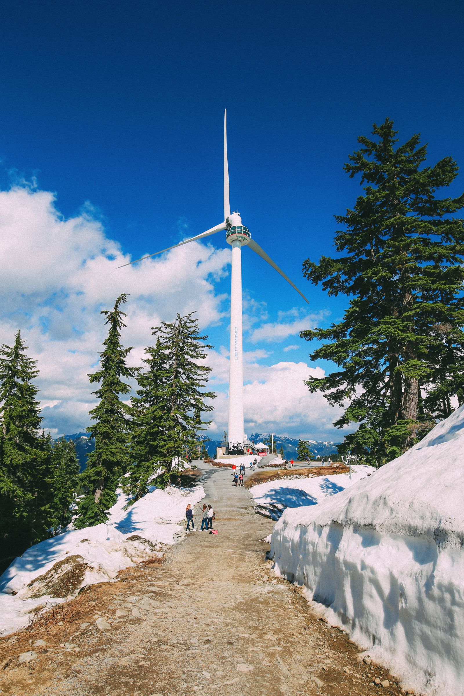 Finding Grizzly Bears On Grouse Mountain... In Vancouver, Canada (34)