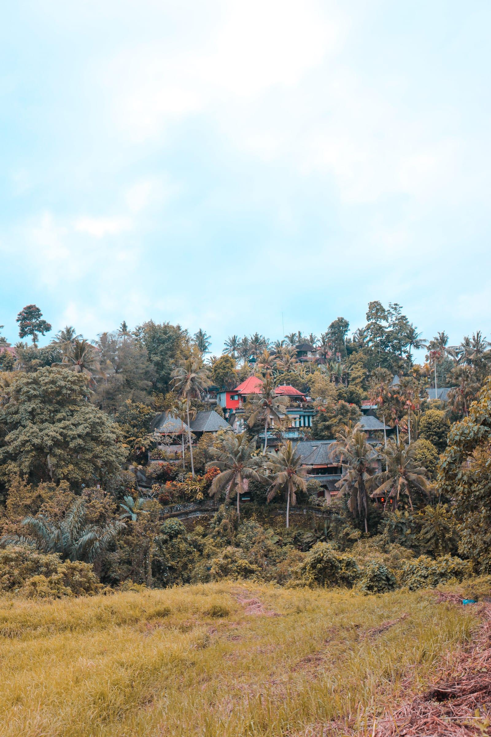 Arrival In Bali + The Campuhan Ridge Walk In Ubud (21)